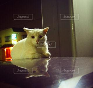 猫の写真・画像素材[834025]