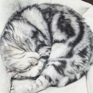 動物の写真・画像素材[1347654]