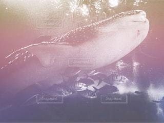 動物の写真・画像素材[1347684]