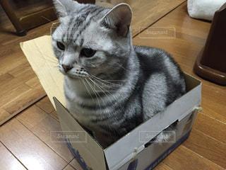 猫の写真・画像素材[1347695]