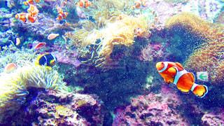 水の中の魚の群れの写真・画像素材[1376690]