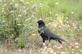 草の中の黒い鳥立ちの写真・画像素材[1092571]