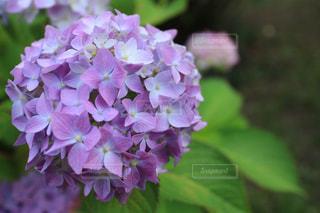 花の写真・画像素材[834142]