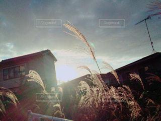 日差しの写真・画像素材[834984]