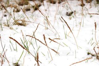 雪景色の写真・画像素材[909996]
