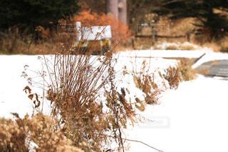 冬景色の写真・画像素材[910106]