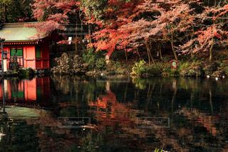 神社の池の写真・画像素材[921590]