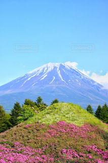 富士芝桜祭りの写真・画像素材[1189947]