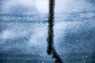雨粒の波紋の写真・画像素材[1246879]