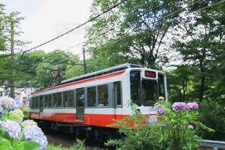 紫陽花と電車の写真・画像素材[1276412]