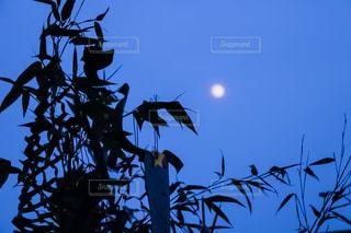 七夕の夜の写真・画像素材[1285841]