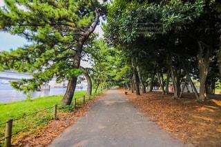 お台場海浜公園の写真・画像素材[1358764]