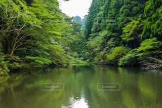 恩賜箱根公園の写真・画像素材[1428934]