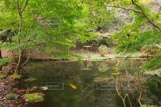 自然公園の池の写真・画像素材[1604309]