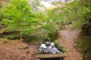 駿河平自然公園の写真・画像素材[1604608]