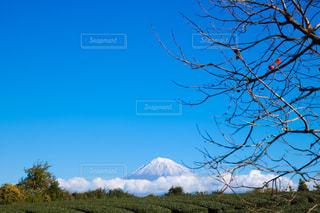 柿の木と富士山の写真・画像素材[1635722]