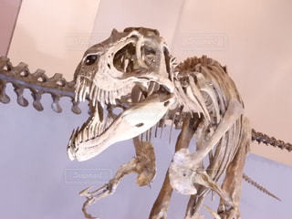 化石の写真・画像素材[835181]