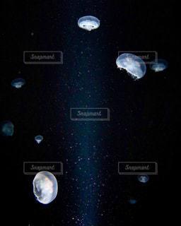 海月の写真・画像素材[1708544]