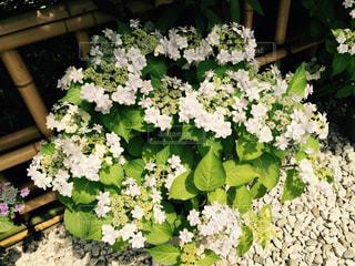 花の写真・画像素材[835768]