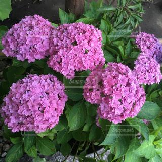 花の写真・画像素材[835771]