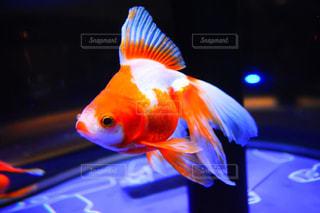 魚の写真・画像素材[836240]