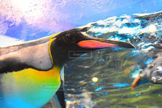 泳ぐペンギン - No.958954