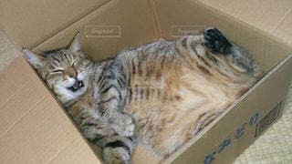 箱猫の写真・画像素材[836288]