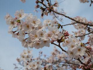 春の訪れ - No.836357