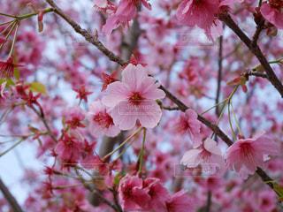 春の訪れ - No.836358