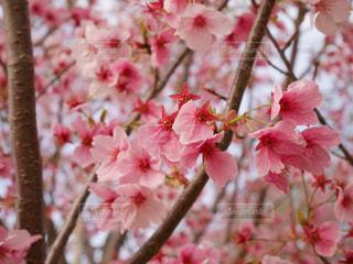 春の訪れ - No.836359