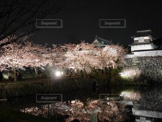 夜桜 - No.836480