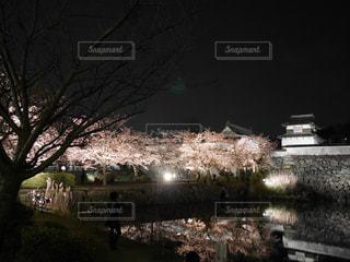 夜桜 - No.836481