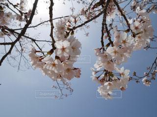 春の訪れ - No.836539