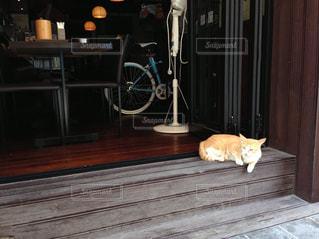 木製の床の上に座って猫 - No.846826