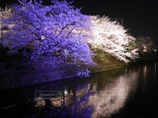 夜桜 - No.1095339