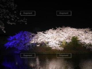 夜桜 - No.1095341