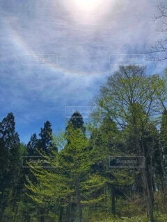 森の中の大きな木の写真・画像素材[3788817]