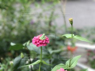 花の写真・画像素材[836951]
