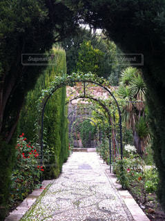 Green Gardenの写真・画像素材[837388]