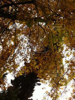 Treeの写真・画像素材[837405]