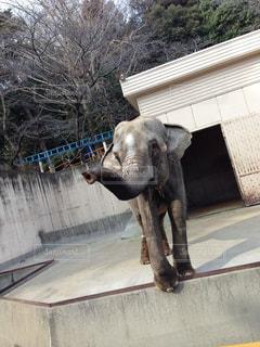 elephantの写真・画像素材[841656]