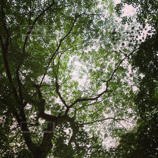 Dark greenの写真・画像素材[841986]