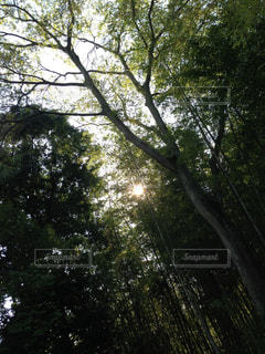 Greenの写真・画像素材[841997]