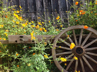 花と荷車の写真・画像素材[843832]