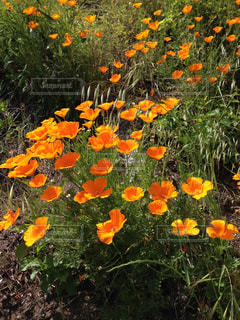 花の写真・画像素材[846542]