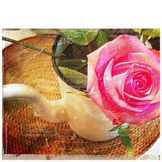 薔薇とポットの写真・画像素材[849574]