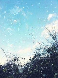 雪・空・草の写真・画像素材[849586]