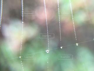 雨粒と蜘蛛の巣の写真・画像素材[853860]