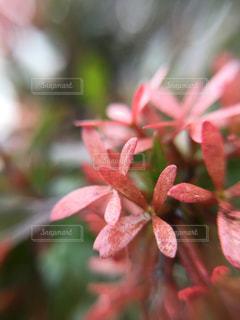 葉っぱと玉ボケの写真・画像素材[853877]