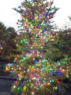 クリスマス ツリー イルミネーションの写真・画像素材[870279]